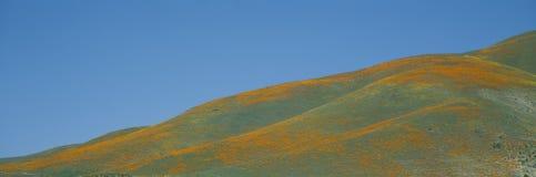 Kalifornien vallmor och vildblommar Arkivfoton