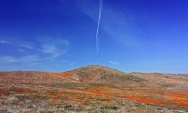 Kalifornien vildblommar och vallmor Arkivbild