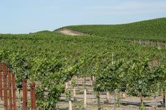Kalifornien vingård Royaltyfri Fotografi