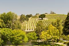 Kalifornien vingård Arkivbilder