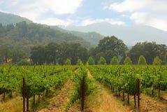 Kalifornien vingård royaltyfria bilder