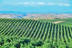 Kalifornien vingårdar, vinland royaltyfri bild
