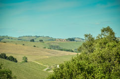 Kalifornien vinland royaltyfria bilder
