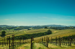Kalifornien vinland Royaltyfri Fotografi