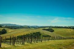 Kalifornien vinland Fotografering för Bildbyråer