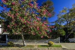 Kalifornien-Vorgarten Lizenzfreie Stockfotos