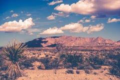 Kalifornien-Wüsten-Thema Stockfotografie