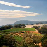 Kalifornien-Weinberg Stockbilder