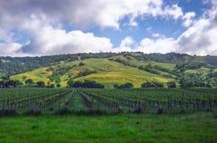 Kalifornien-Weinberg und -rolling Hills im Hintergrund Stockfotografie