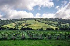 Kalifornien-Weinberg und -rolling Hills im Hintergrund Stockfoto