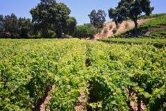 Kalifornien-Weinberg und Weinkellerei Stockfotografie