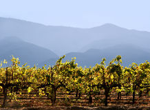 Kalifornien-Weinkellerei Lizenzfreie Stockfotografie