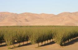 Kalifornii 6 pól uprawnych Zdjęcie Stock