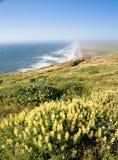kalifornijskie punktu Reyes brzegu Zdjęcia Royalty Free