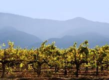 kalifornijskie wytwórnia win Fotografia Royalty Free