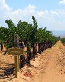 kalifornijskie wytwórnia win Zdjęcie Royalty Free
