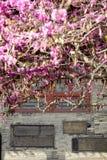Kaligrafii sztuka w Xian beilin muzeum zdjęcia stock