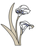 kalii lily odizolowana Obrazy Stock