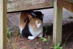 Kalikå Cat Under en bänk Arkivfoton