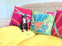 Kaliko-Kätzchen auf einem geflochtenen Stuhl Stockfotos