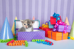 Kalikokätzchen im Geburtstagskasten mit Geschenken und Parteihüten Stockbild