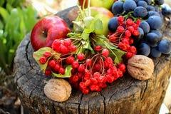 Kalina, grapes and apples Stock Photos