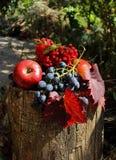 Kalina, grapes and apples Royalty Free Stock Photography