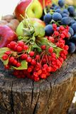Kalina, grapes and apples Stock Images