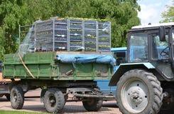 Kaliningrad, Rusland Rekken met bloemzaailing tand in de lichaamsaanhangwagen in het stadsvierkant Royalty-vrije Stock Foto's