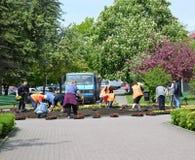 KALININGRAD, RUSSIA - MAY 16, 2015: People land flower seedling Royalty Free Stock Image