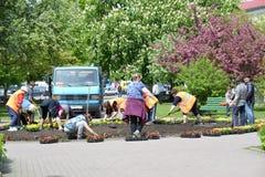 KALININGRAD, RUSSIA - MAY 16, 2015: People land flower seedling Stock Image