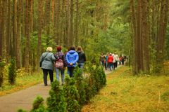 Kaliningrad, Russia - october 2018: Tourists walking with excursion at nature reserve royalty free stock image