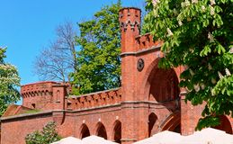 Kaliningrad złocisty muzeum, czerwony ceglany dom, kwitnący kasztany na tle stary czerwony ceglany dom Fotografia Royalty Free