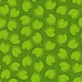 Kalk-Baum Blätter Stock Abbildung