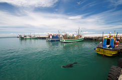 Kalk Bay Cape Town Royalty Free Stock Photography