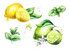 Kalk, citroen en muntbladeren op witte reeks worden geïsoleerd die als achtergrond Waterverfhand getrokken illustratie Stock Afbeeldingen