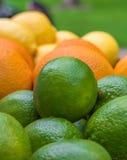 Kalke, Orangen und Zitronen Lizenzfreies Stockbild