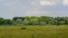 Kalkense Meersen自然reerve的,富兰德,比利时沼泽地 库存图片