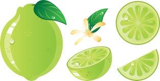 Kalkfrucht-Ikonenset Stockbilder
