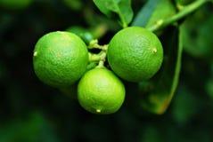 Kalkfruit op brunch op donkere achtergrond Stock Foto's