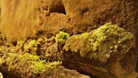 Kalksteen en Been de Catacomben van Tuinparijs Royalty-vrije Stock Afbeelding