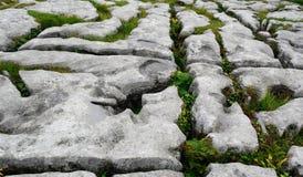 Kalksteen, het Nationale Park van Burren, Ierland Stock Foto's