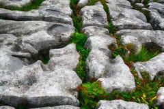 Kalksteen, het Nationale Park van Burren, Ierland Royalty-vrije Stock Foto