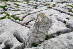 Kalksteen, het Nationale Park van Burren, Ierland Royalty-vrije Stock Afbeeldingen