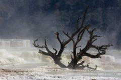 Kalksteen in Nationaal Park Yellowstone Royalty-vrije Stock Foto's