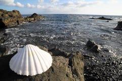 Kalksteenoverzees Shell Stock Foto's