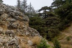 Kalkstein forground mit Libanonzedern im Hintergrund lizenzfreie stockbilder