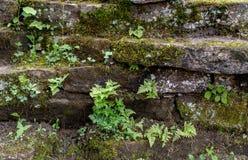 Kalksteinwand bedeckt im Moos und in den Farnen stockfoto