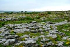 Kalksten den Burren nationalparken, Irland Arkivbilder
