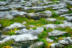 Kalksten den Burren nationalparken, Irland Arkivbild
